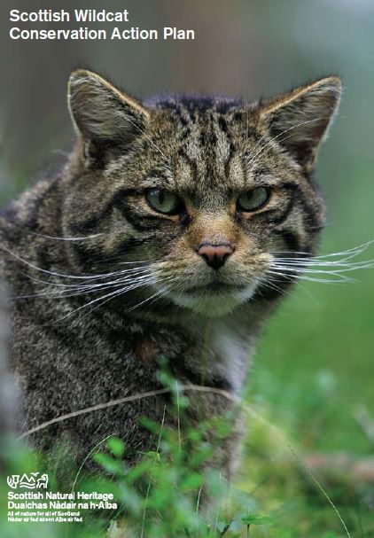 Scottish Wildcat Conservation Action Plan front cover