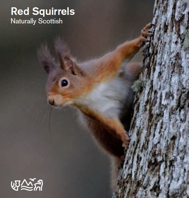 Naturally Scottish - Red squirrels front cover
