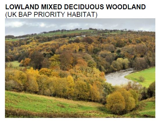 lowland mixed deciduous woodland