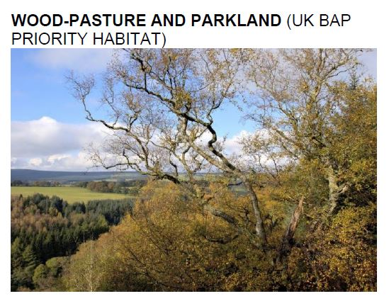 wood pasture and parkland