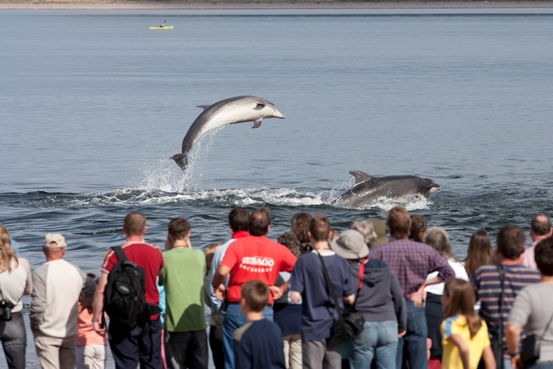 Dolphin watching on the Moray Firth