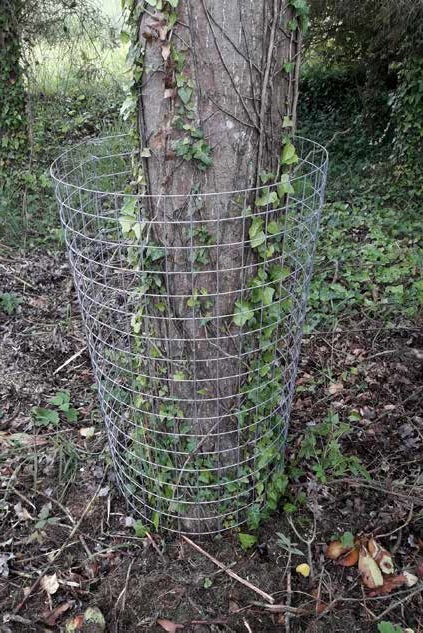 Wire mesh protection for trees