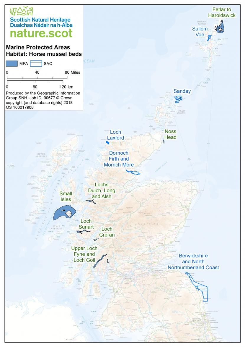 Map of horse mussel beds in the UK