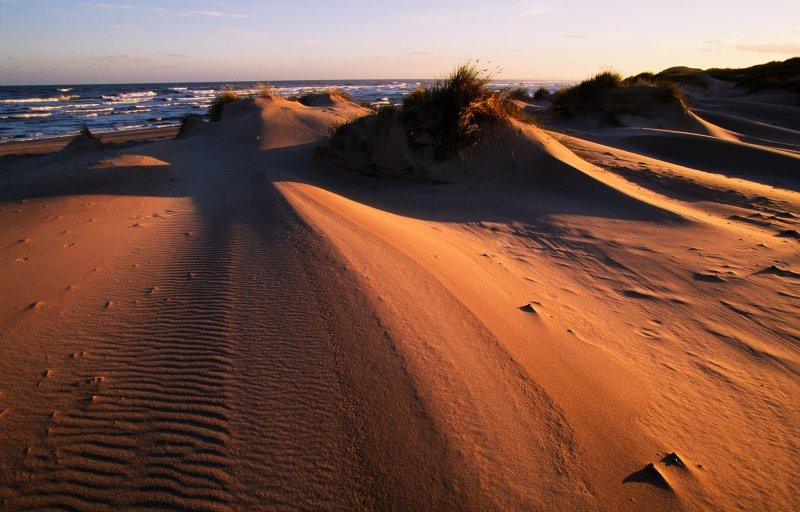 Evening light on the sand dunes at Sands of Forvie NNR, Aberdeenshire. ©Lorne Gill/SNH. For information on reproduction rights contact the Scottish Natural Heritage Image Library on Tel. 01738 444177 or nature.scot