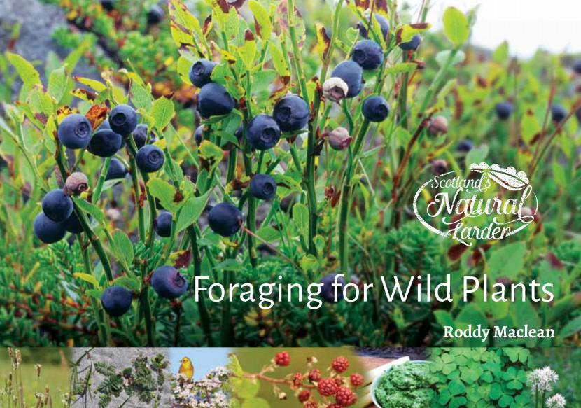 Front cover of Foraging for Wild Plants