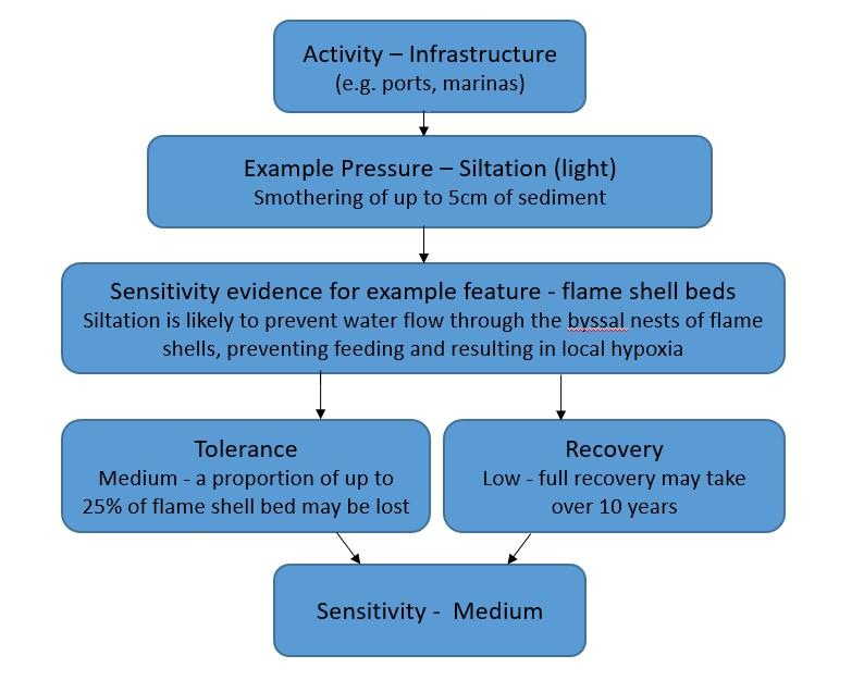 Sensitivity assessment process: Activity - Infrastructure forward to Example pressure - Siltation(light) forward to Sensitivity evidence for eg flame shell beds forward to Tolerance and Recovery both forward to Sensitivity medium