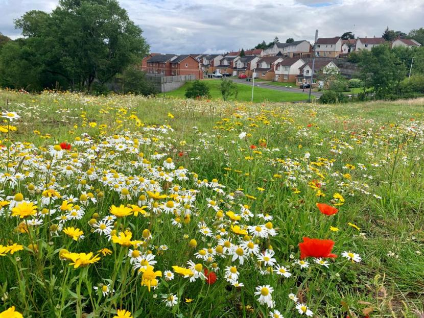 Fernbrae Meadows, Green Infrastructure Site Visit