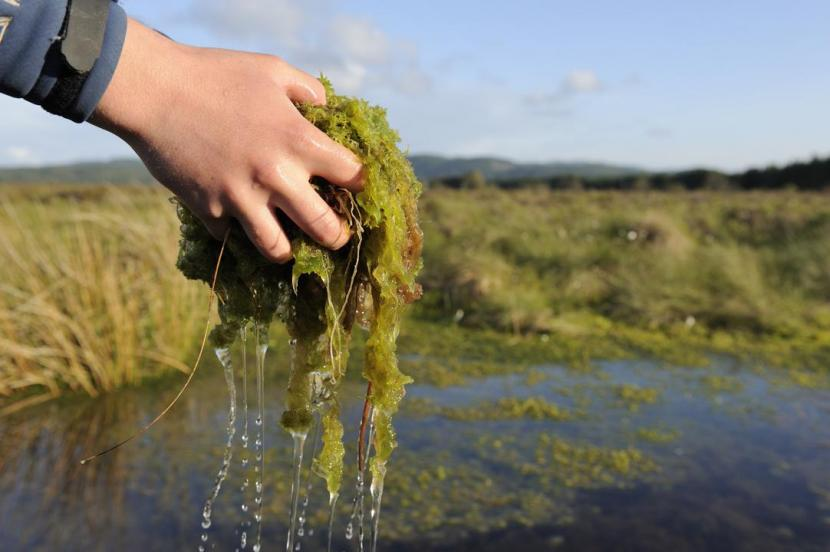 Wetland mosses such as sphagnum are key in creating peatlands which store and filter water.