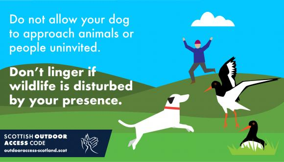 Don't allow your dog to approach animals or people uninvited. Don't linger if wildlife is disturbed by your presence.