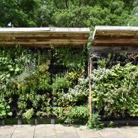 Battleby Living Wall