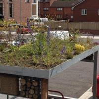 Green roof at Woodside Health Centre