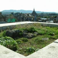 Green Roof Garden, National Museum of Scotland