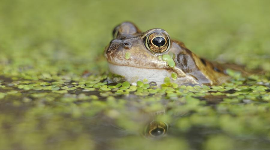 amphibians and reptiles scottish natural heritage