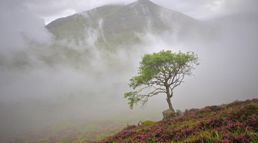 Birch tree, mist and low cloud Coire Ardair, Creag Meagaidh NNR ©Lorne Gill/SNH. For information on reproduction rights contact the Scottish Natural Heritage Image Library on Tel. 01738 444177 or www.nature.scot