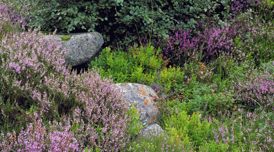 Heather, Blaeberry, Birch and Lichen covered boulders at Creag Meagaidh NNR © Lorne Gill/SNH. For information on reproduction rights contact the Scottish Natural Heritage Image Library on Tel. 01738 444177 or www.nature.scot