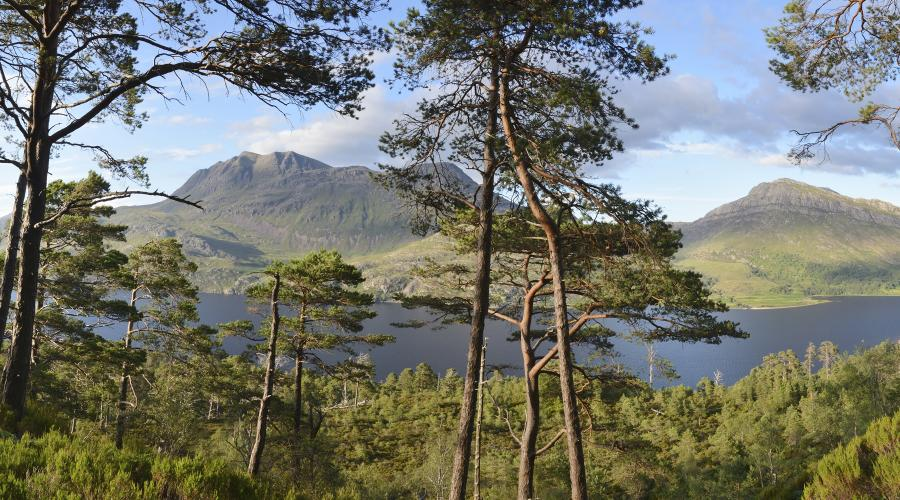 Scots pine woodland above Loch Maree with Slioch beyond, Beinn Eighe National Nature Reserve ©Lorne Gill/SNH. For information on reproduction rights contact the Scottish Natural Heritage Image Library on Tel. 01738 444177 or www.nature.scot