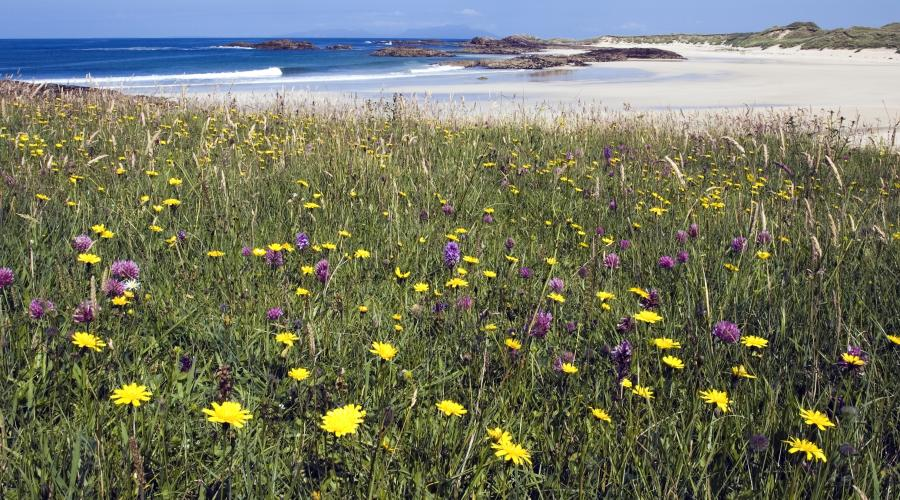 Machair at Gallanach on the Isle of Coll