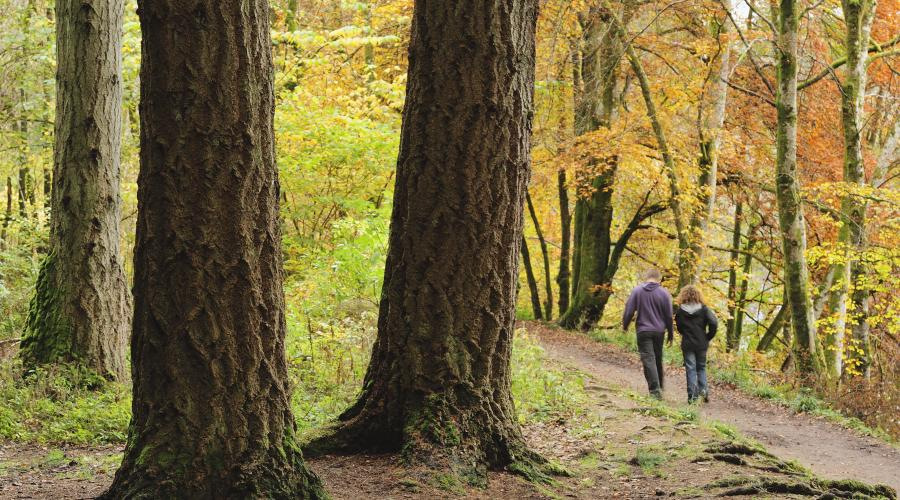 Couple walking through a beech woodland in autumn, Perthshire. ©Lorne Gill/2020VISION For information on reproduction rights contact the Scottish Natural Heritage Image Library on Tel. 01738 444177 or www.nature.scot