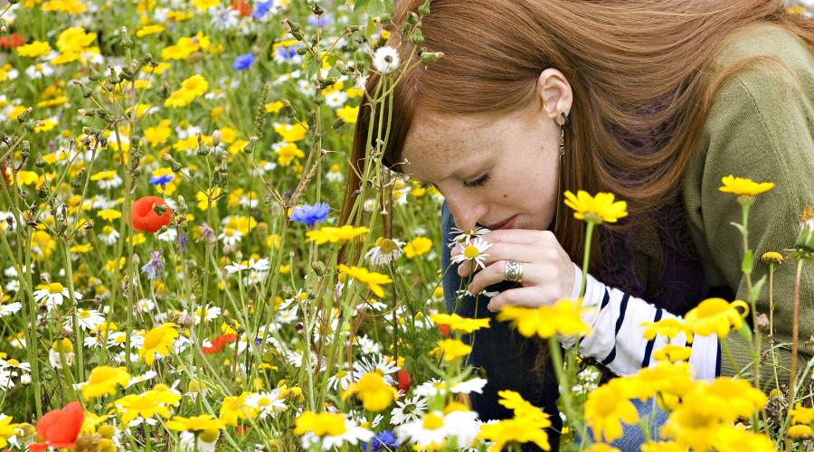woman smelling wild flowers ©beckyduncanphotographyltd/SNH. For information on reproduction rights contact the Scottish Natural Heritage Image Library on Tel. 01738 444177 or www.nature.scot