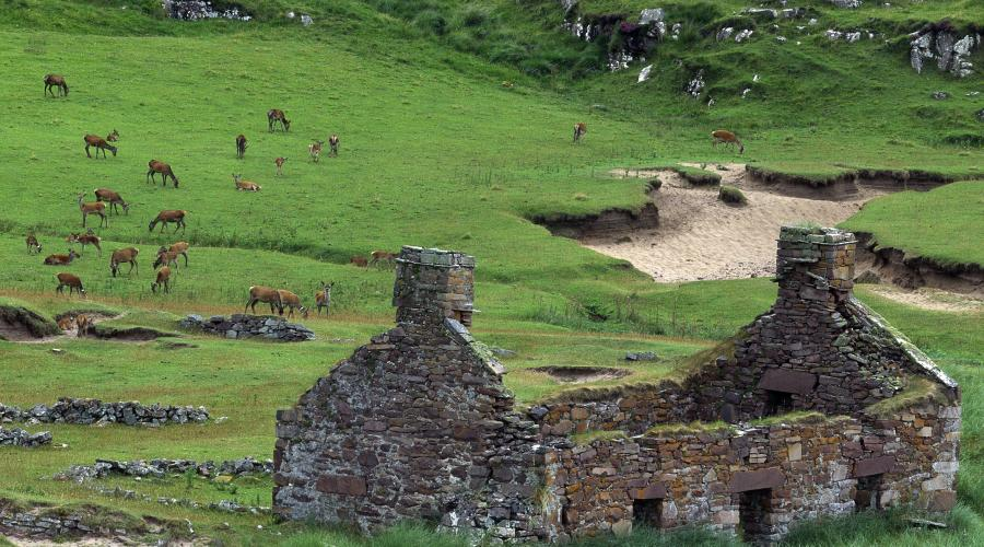 A herd of deer grazing beside a ruined dwelling on Isle of Rum NNR ©Laurie Campbell/SNH. For information on reproduction rights contact the Scottish Natural Heritage Image Libary on tel. 01738 444177 or www.nature.scot