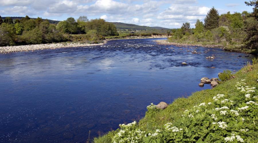 River Dee near Dinnet, Aberdeenshire ©Lorne Gill/SNH. For information on reproduction rights contact the Scottish Natural Heritage Image Library on Tel. 01738 444177 or www.nature.scot