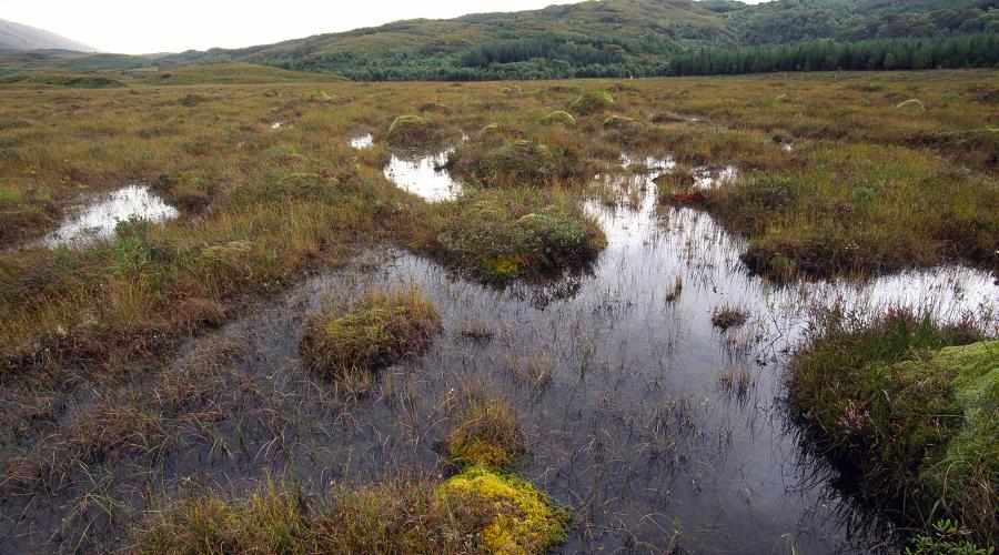 Blanket bog at Claish Moss NNR, Ardnamurchan ©Lorne Gill/SNH. For information on reproduction rights contact the Scottish Natural Heritage Image Library on Tel. 01738 444177 or www.nature.scot