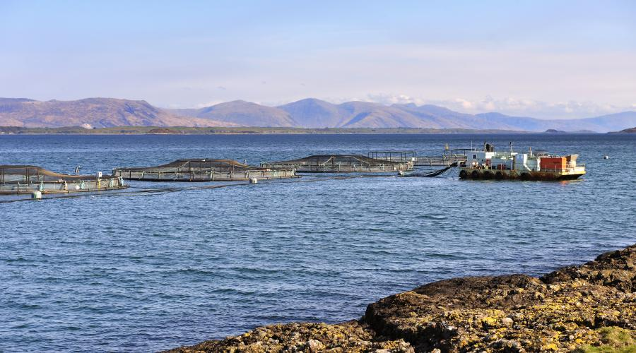 Fish cages on the west side of the Isle of Kerrera, Oban, Argyll ©Lorne Gill/SNH. For information on reproduction rights contact the Scottish Natural Heritage Image Library on Tel. 01738 444177 or www.nature.scot