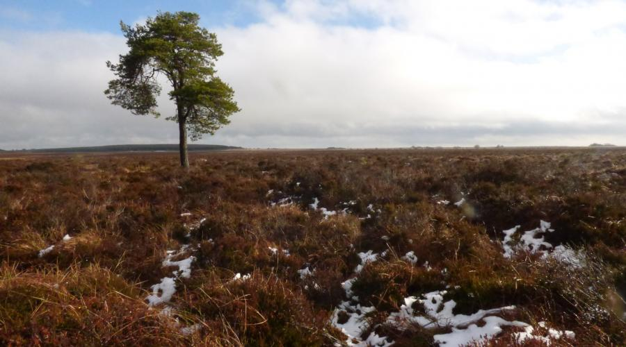 View over Blawhorn moss NNR landscape