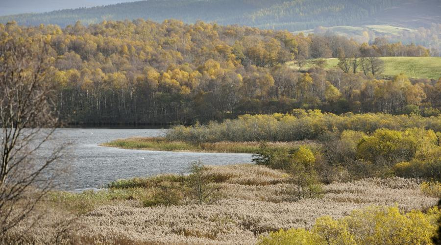 Bull rushes and willow carr at Muir of Dinnet NNR. ©Lorne Gill/SNH. For information on reproduction rights contact the Scottish Natural Heritage Image Library on Tel. 01738 444177 or www.nature.scot