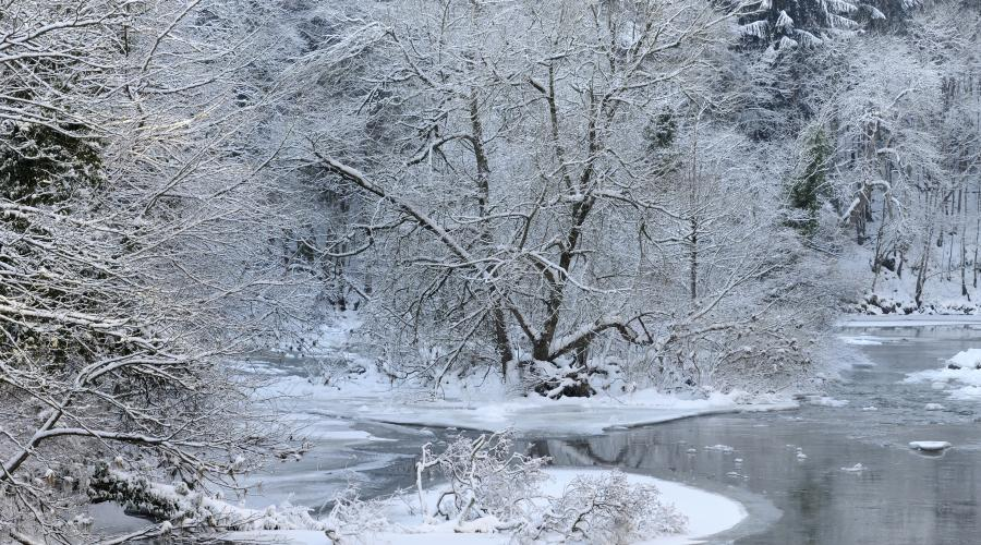Snow covered trees and a frozen River Clyde at New Lanark, Clyde Valley Woodlands NNR. ©Lorne Gill/SNH. For information on reproduction rights contact the Scottish Natural Heritage Image Library on Tel. 01738 444177 or www.nature.scot
