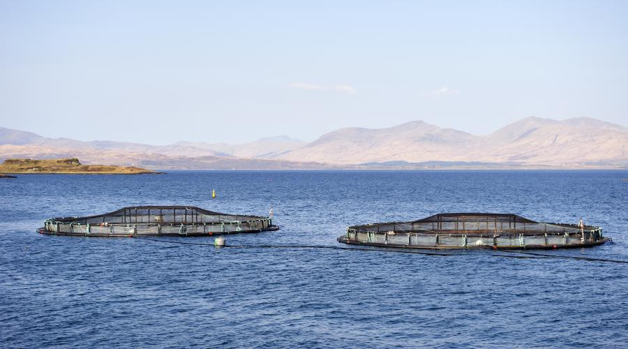 Fish cages on the west side of the Isle of Kerrera, Oban, Isle of Kerrera, Argyll and Stirling Area .©Lorne Gill/SNH. For information on reproduction rights contact the Scottish Natural Heritage Image Library on Tel. 01738 444177 or www.nature.scot