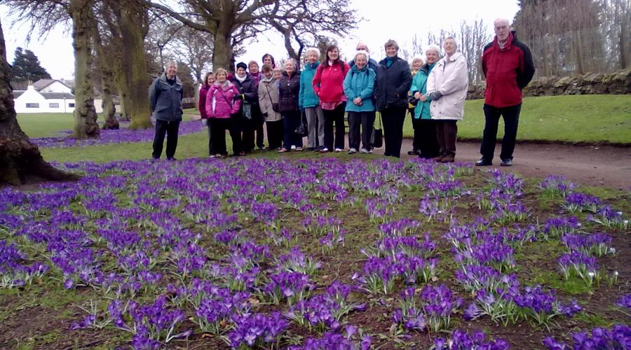 Dundee Green Health Partnership group photo in front of a wonderful dispaly of spring crocuses. ©SNH. For information on reproduction rights contact the Scottish Natural Heritage Image Library on Tel. 01738 444177 or www.nature.scot