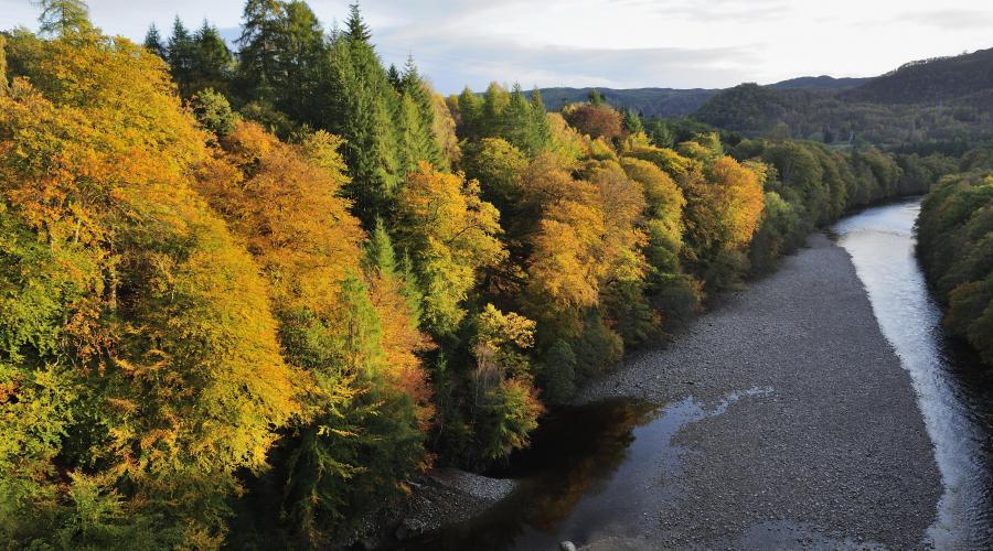 Beech woodland growing by the River Garry, Pass of Killiecrankie, Perthshire. ©Lorne Gill/2020VISION. For information on reproduction rights contact the Scottish Natural Heritage Image Library on Tel. 01738 444177 or www.nature.scot