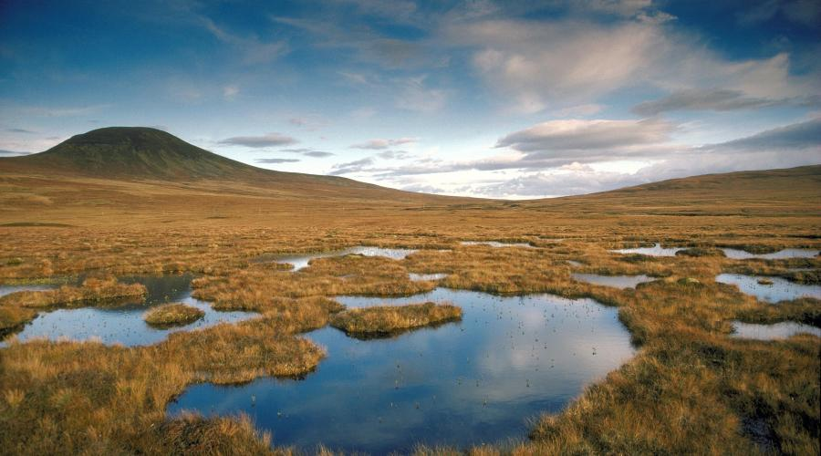 Blanket bog in the Flow Country - Caithness. ©Steve Moore/SNH. For information on reproduction rights contact the Scottish Natural Heritage Image Library on Tel. 01738 444177 or www.nature.scot