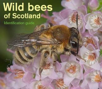 Wild bees of Scotland: Identification guide front cover