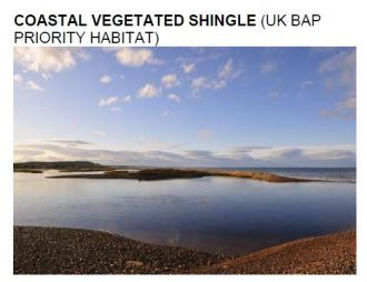 coastal veg shingle