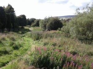 Image of Clydebank Community Rewilding Project - TCV