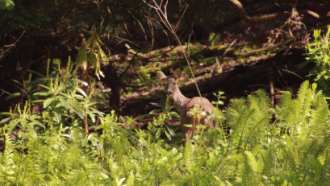 Wild Ways Well - Image of a deer - TCV