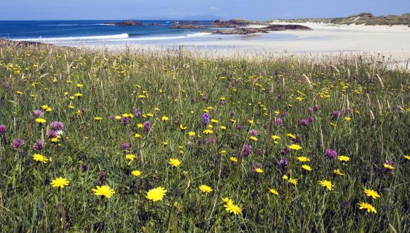 Machair at Gallanach on the Isle of Coll ©Lorne Gill/SNH. For information on reproduction rights contact the Scottish Natural Heritage Image Library on Tel. 01738 444177 or www.nature.scot