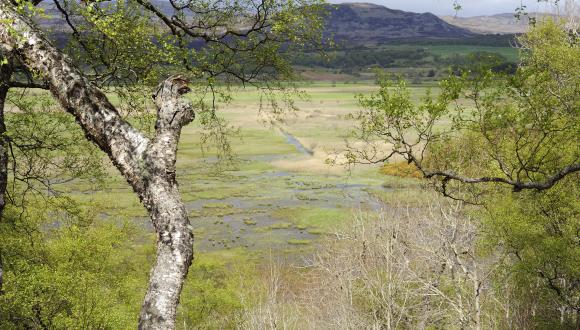 Insh Marshes NNR near Kingussie, East Highland. ©Lorne Gill/SNH. For information on reproduction rights contact the Scottish Natural Heritage Image Library on Tel. 01738 444177 or www.nature.scot