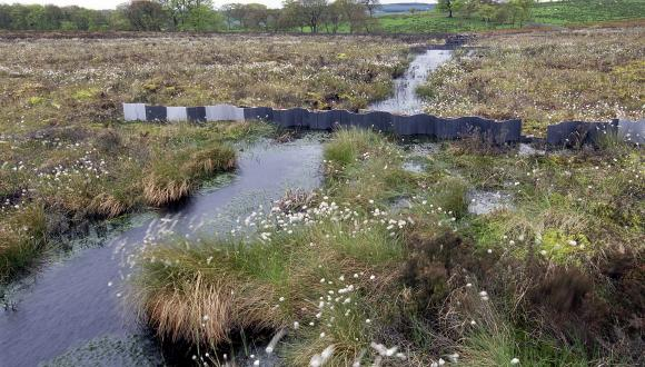 Blocked ditch at Blawhorn Moss NNR ©Lorne Gill/SNH. For information on reproduction rights contact the Scottish Natural Heritage Image Library on Tel. 01738 444177 or www.nature.scot