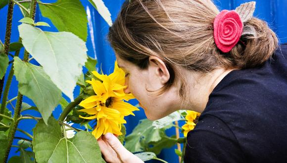 woman smelling sunflower ©beckyduncanphotographyltd/SNH. For information on reproduction rights contact the Scottish Natural Heritage Image Library on Tel. 01738 444177 or www.nature.scot