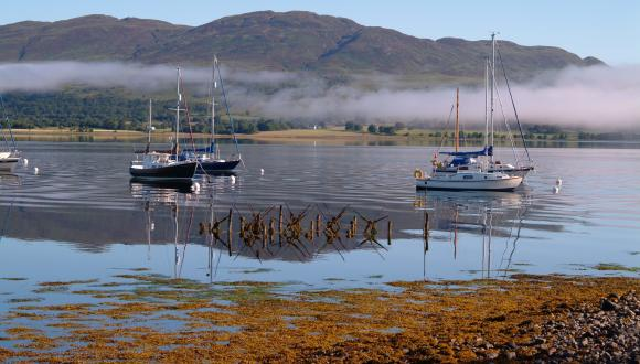 Moorings in Loch Creran SAC. Graham Saunders © SNH. All rights reserved. Graham Saunders © SNH. All rights reserved. Graham Saunders © SNH. All rights reserved, Please contact CMEU for details - snhmarinephotos@nature.scot