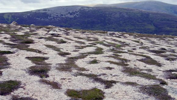 Wind patterned vegetation on Carn Crom above Derry lodge in the Cairngorm mountains. ©Lorne Gill/SNH. For information on reproduction rights contact the Scottish Natural Heritage Image Library on Tel. 01738 444177 or www.nature.scot