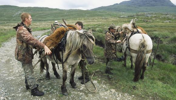 Ghillies unloading stags from ponies after stalk, central Rum, July. ©Laurie Campbell/SNH. For information on reproduction rights contact the Scottish Natural Heritage Image Library on Tel. 01738 444177 or www.nature.scot