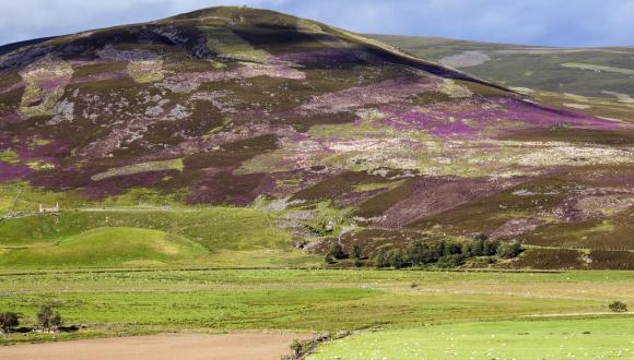 Muirburn on a heather covered hillside near Gairnshiel, Strathdon. ©Lorne Gill/SNH. For information on reproduction rights contact the Scottish Natural Heritage Image Libary on tel. 01738 444177 or www.nature.scot