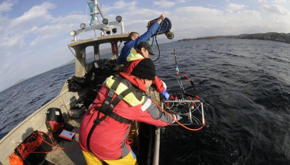 Marine biodiversity monitoring. NON SNH COPYRIGHT, FOR SNH USE ONLY ON THE WEBSITE. For information on reproduction rights contact the Scottish Natural Heritage Image Library on Tel. 01738 444177 or www.nature.scot.