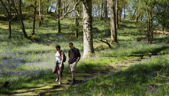 Tourists walking on the woodland trail at Inchcailloch NNR, Loch Lomond