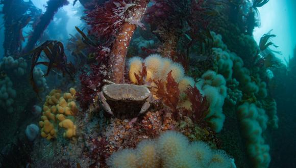 A rocky reef habitat, Outer Hebrides