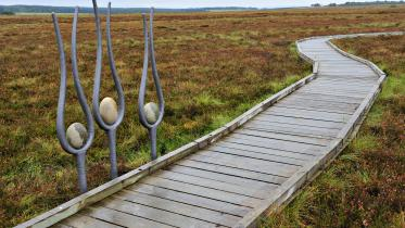 Sculptures and raised walkway at Blawhorn Moss NNR. ©Lorne Gill/SNH.  For information on reproduction rights contact the Scottish Natural Heritage Image Library on Tel. 01738 444177 or www.nature.scot